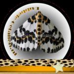 Vlinder betekenis Dubbele-Getallen Bonte Bessenvlinder