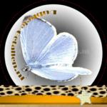 Vlinder betekenis Dubbele-Getallen Boomblauwtje