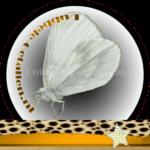 Vlinder betekenis Dubbele-Getallen Boswitje