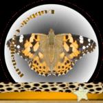 Vlinder betekenis Dubbele-Getallen Distelvlinder