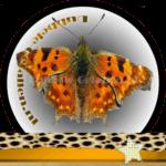 Vlinder betekenis Dubbele-Getallen Gehakkelde Aurelia