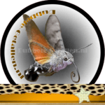 Vlinder betekenis Dubbele-Getallen Kolibrievlinder