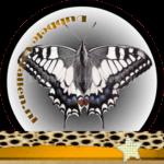Vlinder betekenis Dubbele-Getallen Koninginnepage