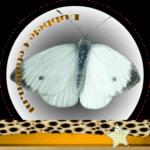 Vlinder betekenis Dubbele-Getallen Koolwitje