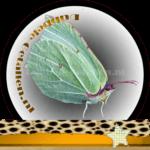 Vlinder betekenis Dubbele-Getallen Citroenvlinder