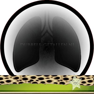 Energetische orgaanklok longen