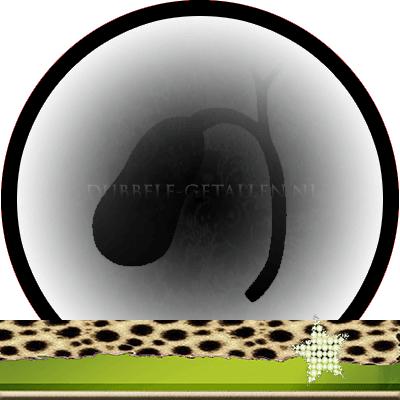 Energetische orgaanklok de galblaas